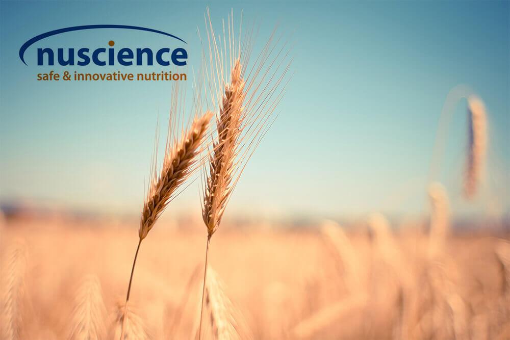 Nutrition Solutions - Nuscience - AngelaAlfa